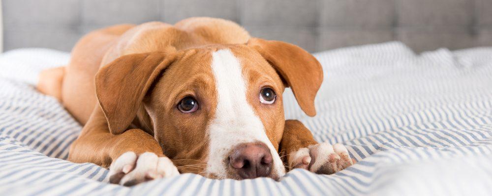 symptome-chien-malade
